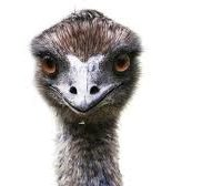 What Comes After Emu Oil?