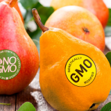 GMO_Food_Top_Banner